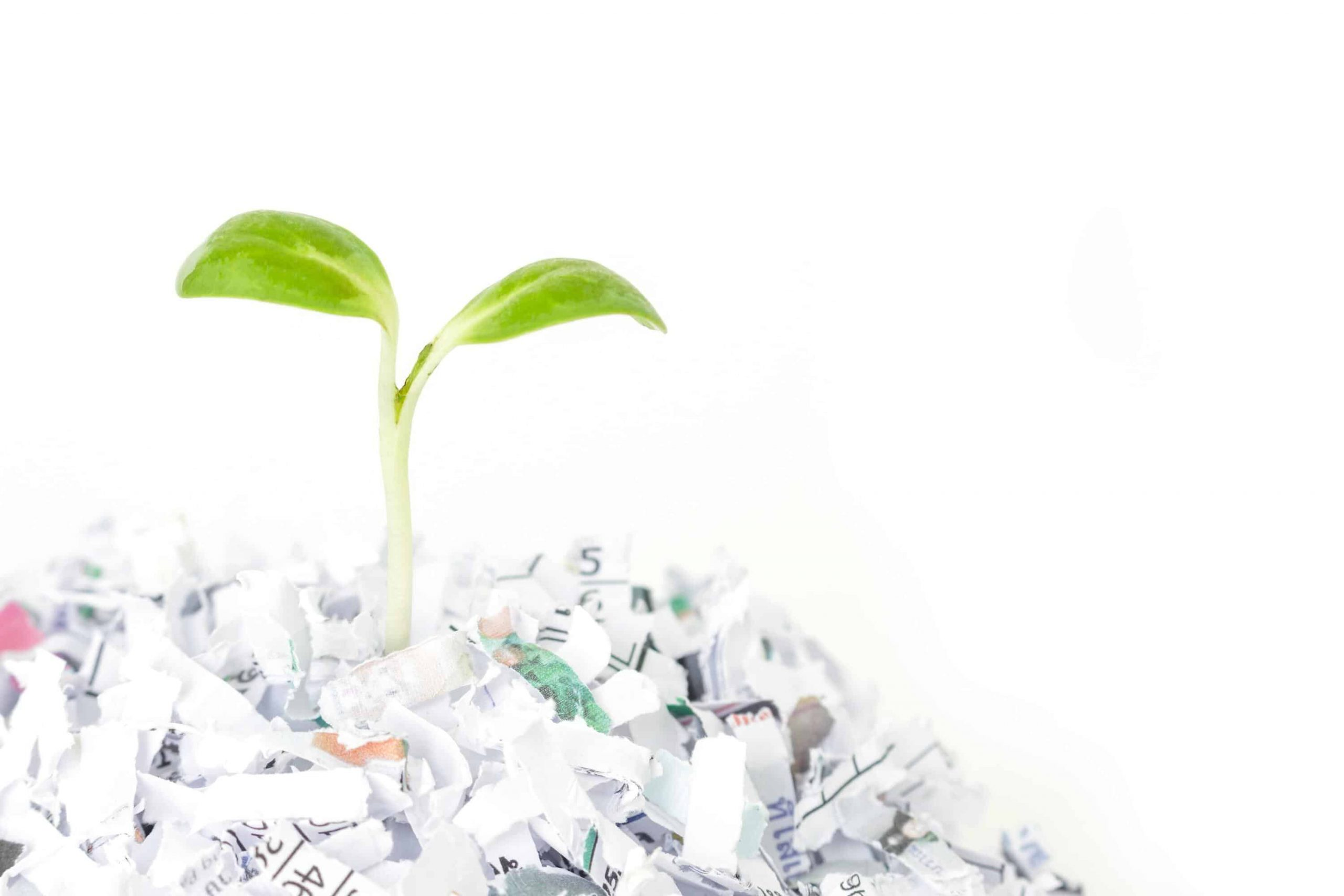 paper and plant